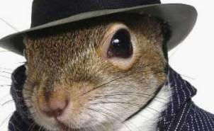 eekhoorn spion